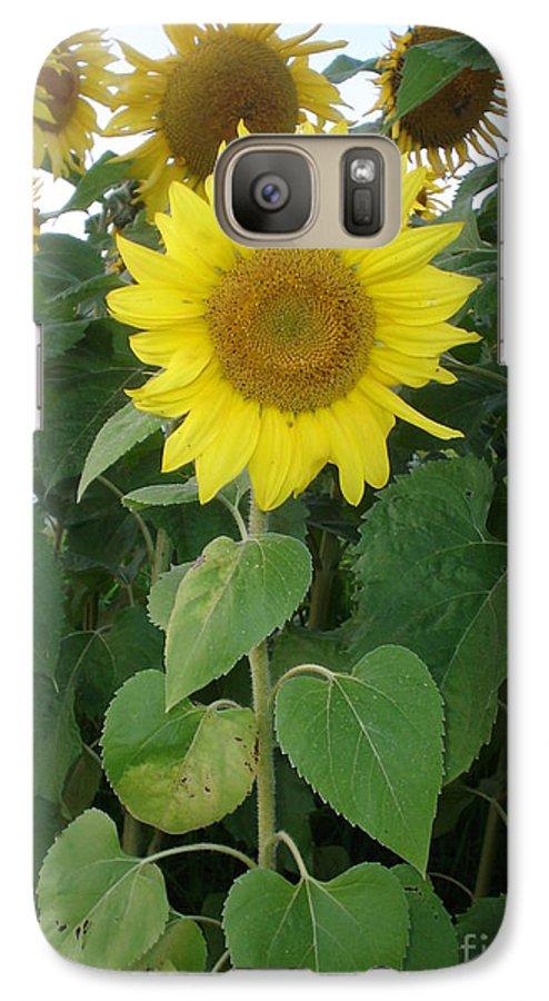 Sunflower's Galaxy S7 Case featuring the photograph Sunflower Amungst Sunflower's by Chandelle Hazen