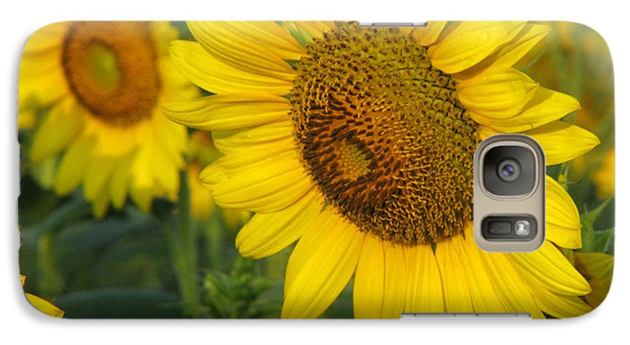 Sunflowers Galaxy S7 Case featuring the photograph Sunflower Series by Amanda Barcon