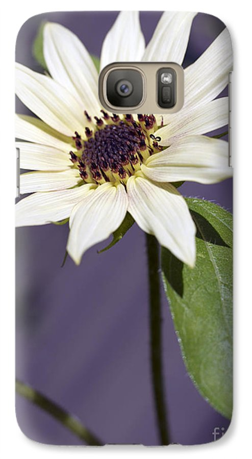 Helianthus Annus Galaxy S7 Case featuring the photograph Sunflower by Tony Cordoza