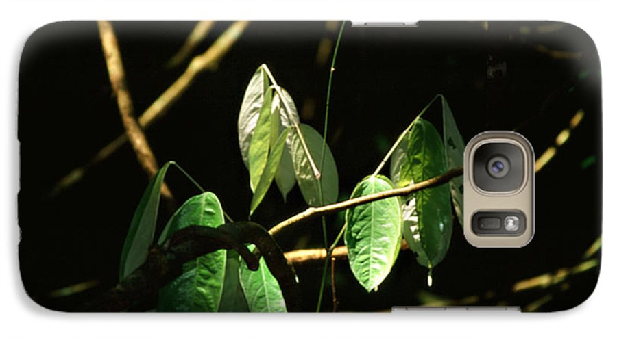 Leaves Galaxy S7 Case featuring the photograph Sunlit Leaves by Kathy McClure
