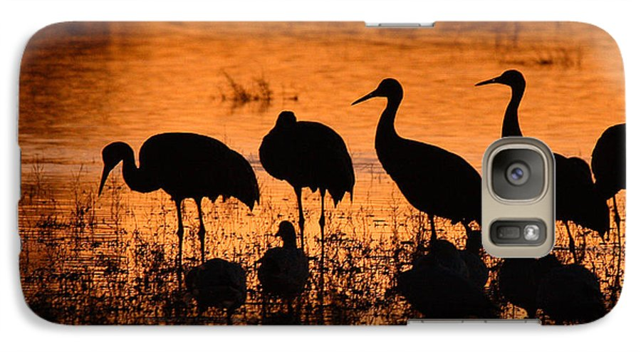 Crane Galaxy S7 Case featuring the photograph Sunset Reflections Of Cranes And Geese by Max Allen