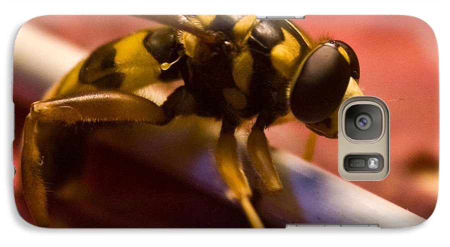 Insect Galaxy S7 Case featuring the photograph Syrphid Fly Poised by Douglas Barnett