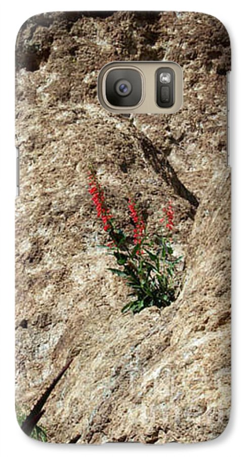 Wildflowers; Flowers Galaxy S7 Case featuring the photograph Tenacity by Kathy McClure