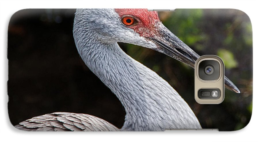 Bird Galaxy S7 Case featuring the photograph The Greater Sandhill Crane by Christopher Holmes