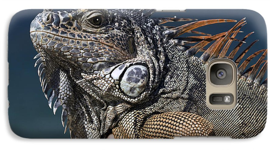 Animal Galaxy S7 Case featuring the photograph The Night Of The Iguana by Carl Purcell