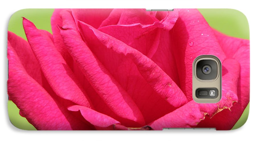 Roses Galaxy S7 Case featuring the photograph The Rose by Amanda Barcon
