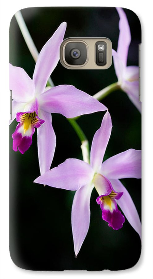 Orchid Galaxy S7 Case featuring the photograph Three Orchids by Marilyn Hunt