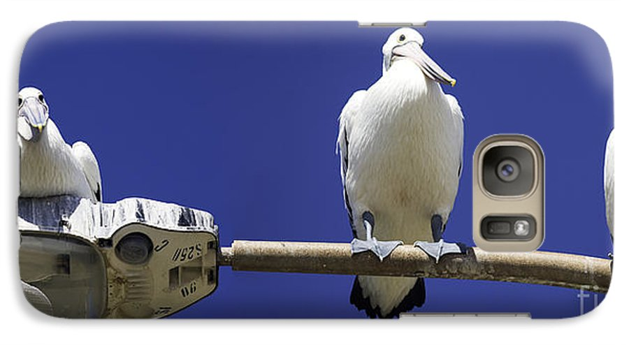Australian White Pelicans Galaxy S7 Case featuring the photograph Three Pelicans On A Lamp Post by Avalon Fine Art Photography