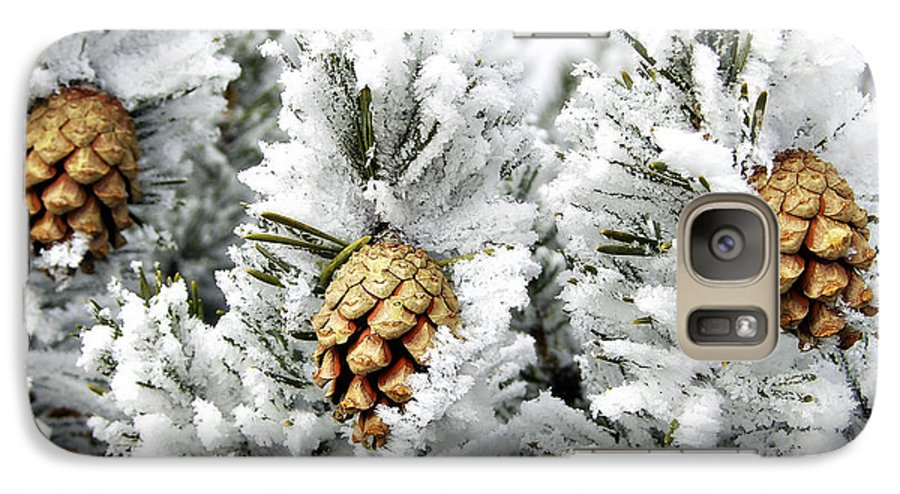 Frosty Galaxy S7 Case featuring the photograph Three Pinecones by Marilyn Hunt
