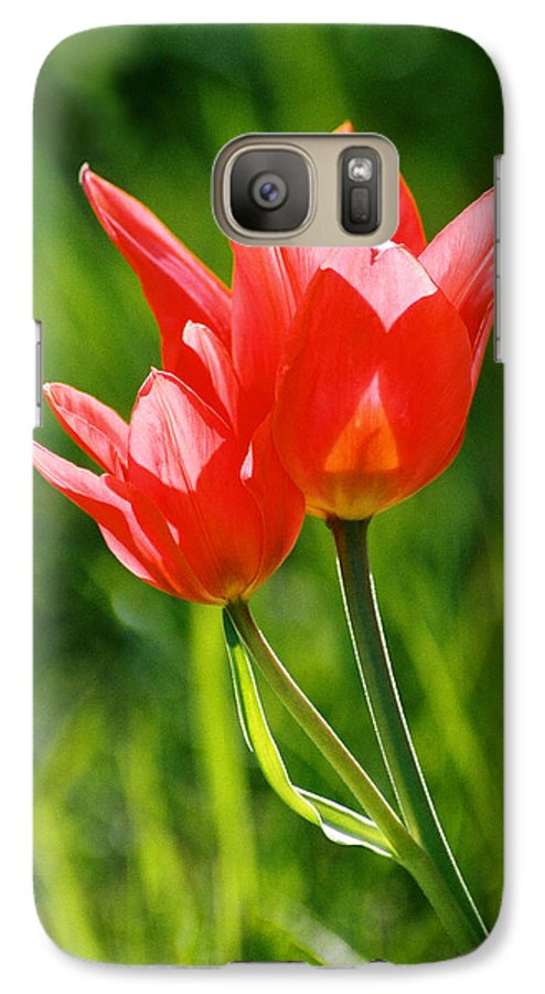 Flowers Galaxy S7 Case featuring the photograph Toronto Tulip by Steve Karol