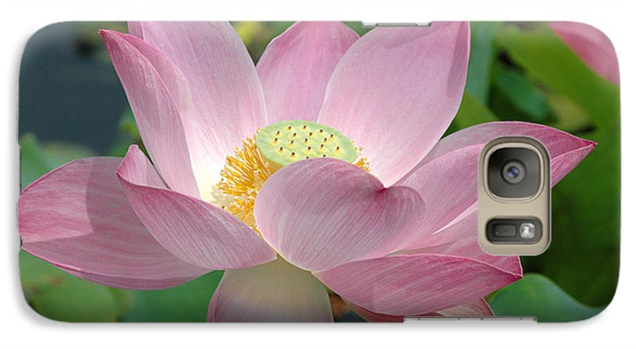 Flower Galaxy S7 Case featuring the photograph Untitled by Kathy Schumann
