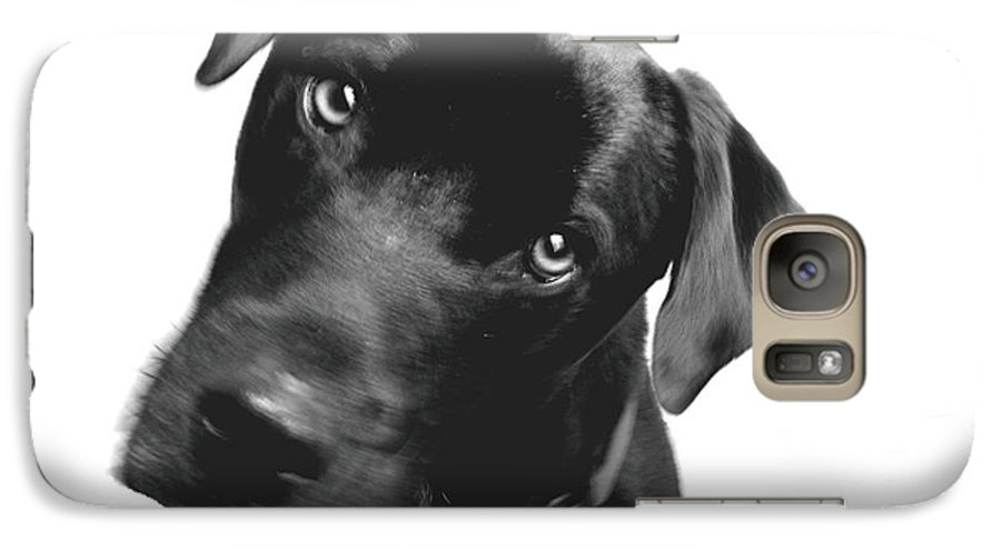 Labrador Galaxy S7 Case featuring the photograph What by Amanda Barcon