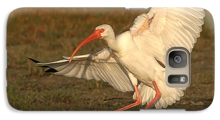 Ibis Galaxy S7 Case featuring the photograph White Ibis Landing Upon Ground by Max Allen