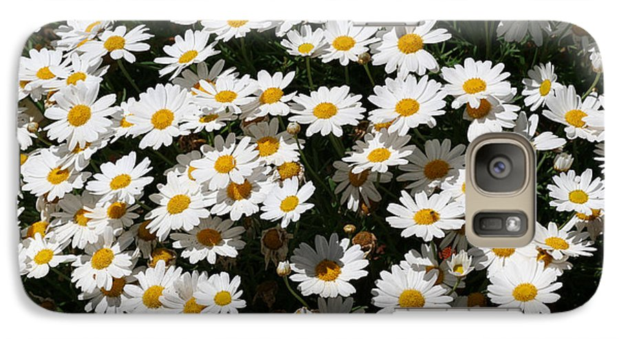 White Galaxy S7 Case featuring the photograph White Summer Daisies by Christine Till
