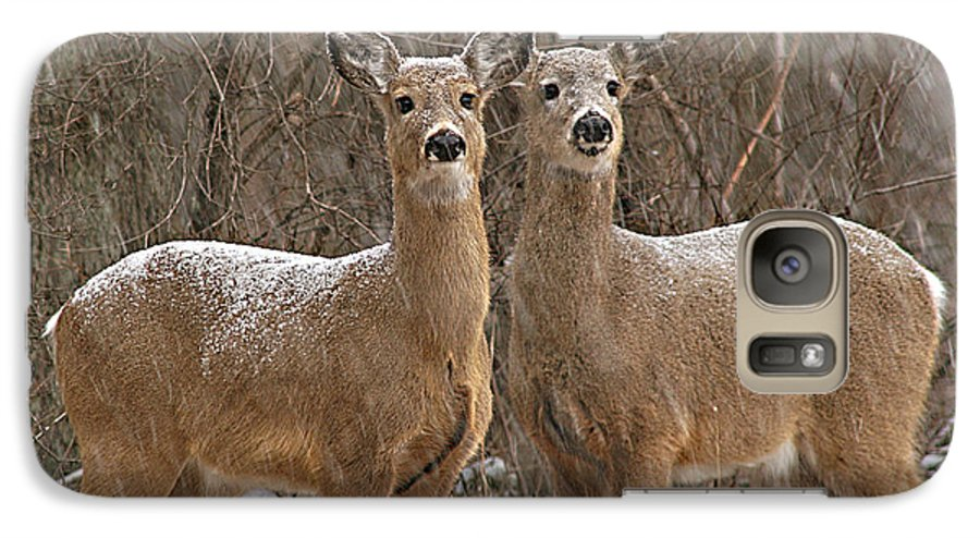 Deer Galaxy S7 Case featuring the photograph White-tailed Deer Pair Peering Out From Snowstorm by Max Allen