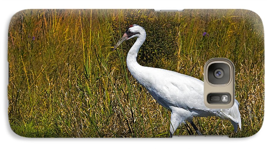 whooping Crane Galaxy S7 Case featuring the photograph Whooping Crane by Al Mueller