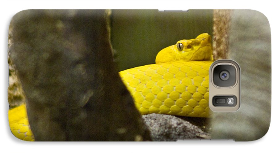 Yellow Galaxy S7 Case featuring the photograph Wicked Snake by Douglas Barnett