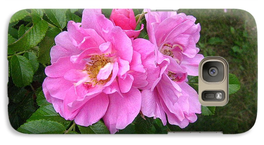 Rose Galaxy S7 Case featuring the photograph Wild Roses by Melissa Parks