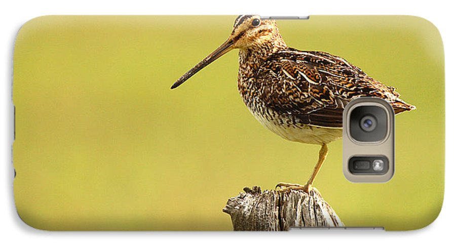 Snipe Galaxy S7 Case featuring the photograph Wilson's Snipe On Morning Perch by Max Allen