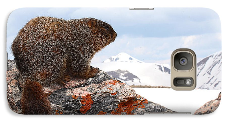 Marmot Galaxy S7 Case featuring the photograph Yellow-bellied Marmot Enjoying The Mountain View by Max Allen