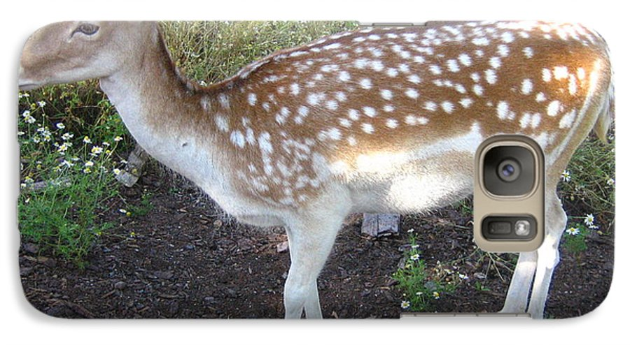 Deer Galaxy S7 Case featuring the photograph Young Doe by Melissa Parks