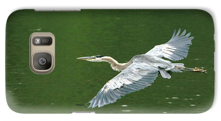 Landscape Nature Wildlife Bird Crane Heron Green Flight Ohio Water Galaxy S7 Case featuring the photograph Young Great Blue Heron Taking Flight by Dawn Downour