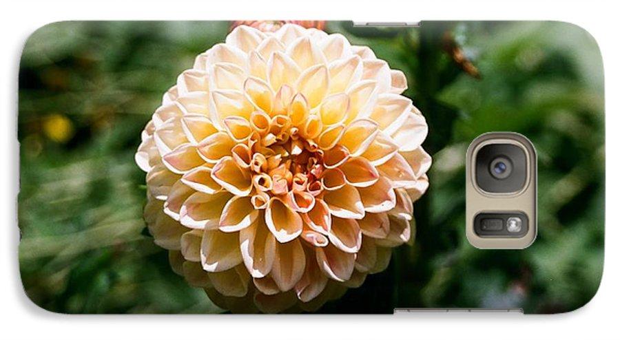 Zinnia Galaxy S7 Case featuring the photograph Zinnia by Dean Triolo