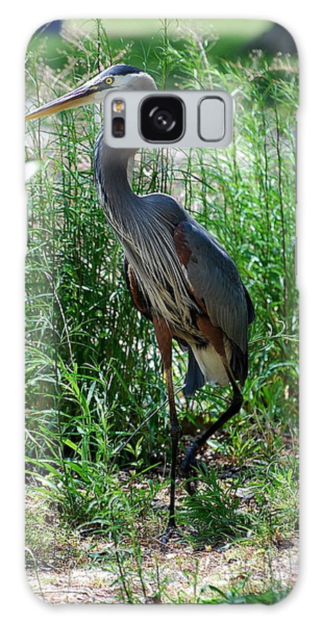 Blue Galaxy S8 Case featuring the photograph Blue Heron by Francie Davis
