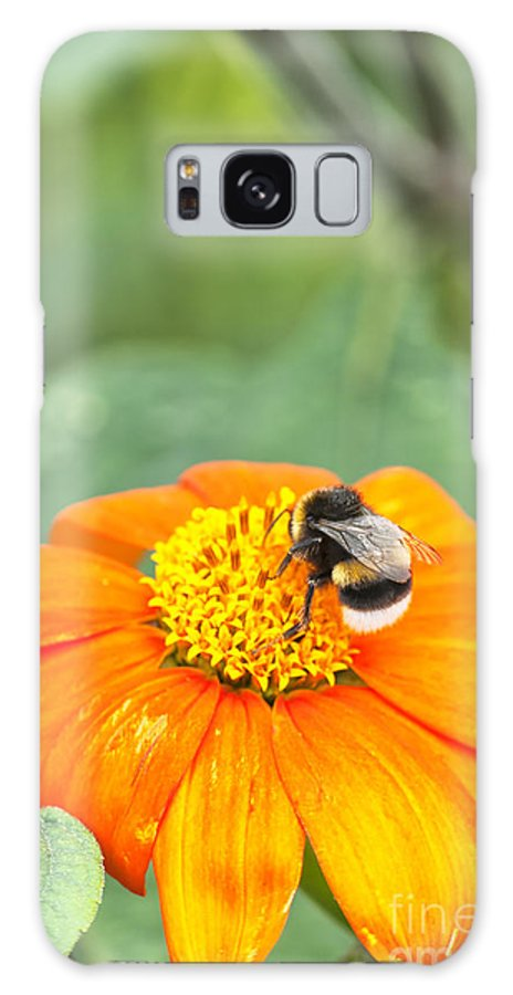 Insect Galaxy S8 Case featuring the photograph Bumble Bee 01 by Antony McAulay