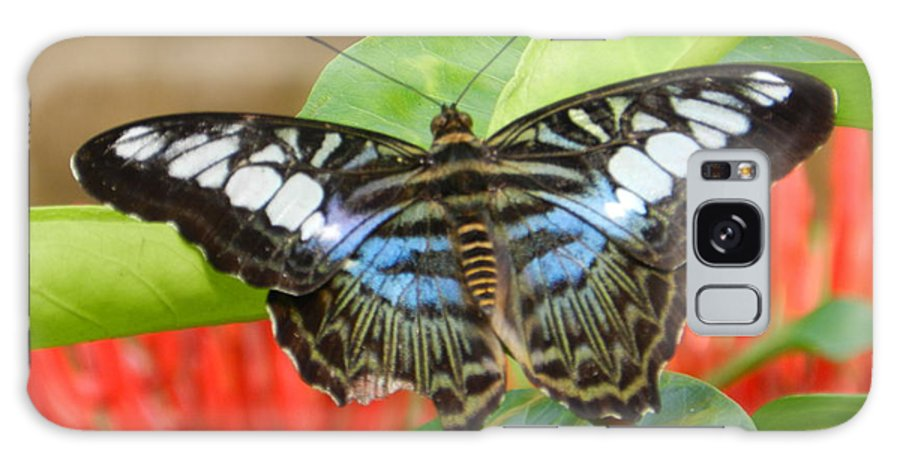 Butterfly Photograph Galaxy S8 Case featuring the photograph Butterfly Beauty And Grace by Sandra Sengstock-Miller
