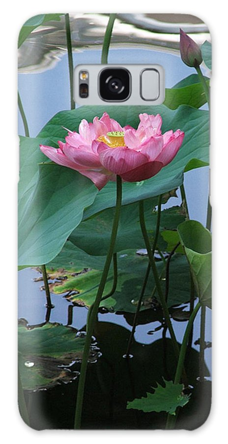 Lotus Galaxy S8 Case featuring the photograph Lotus Flower At Calloway by Robert Meanor