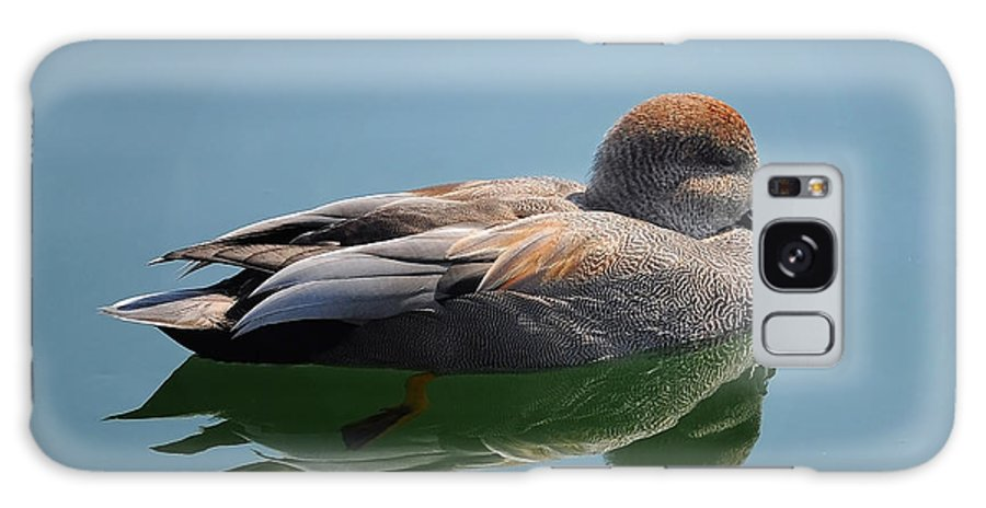 Duck Galaxy S8 Case featuring the photograph Male Gadwall Duck by Elaine Manley