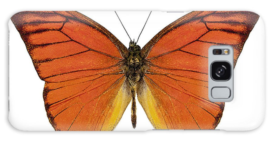 Antenna Galaxy S8 Case featuring the photograph Orange Butterfly Species Appias Nero Neronis by Pablo Romero
