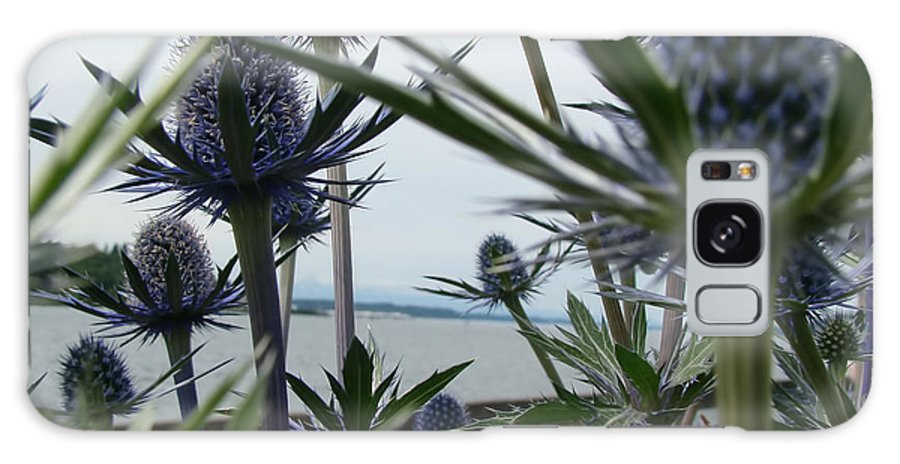 They Have Spiny Leaves Of Blue Or Grey And Spiky White Or Blue Flowers That Bloom In The Second Part Of Summer. Galaxy S8 Case featuring the photograph Sea Holly by Beverly Guilliams