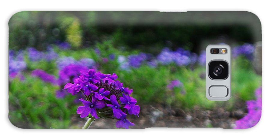 Floral Galaxy S8 Case featuring the photograph Violet Flower by Eric Schiabor