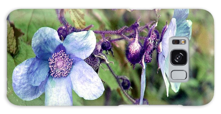 Rose Galaxy S8 Case featuring the photograph Wild Blue Rose by Robert Burns