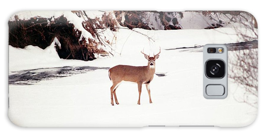 Whitetail Deer Galaxy S8 Case featuring the photograph 080706-89 by Mike Davis