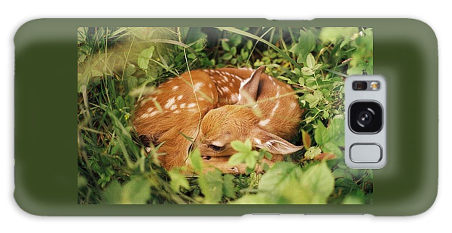 Deer Galaxy Case featuring the photograph 080806-17 by Mike Davis