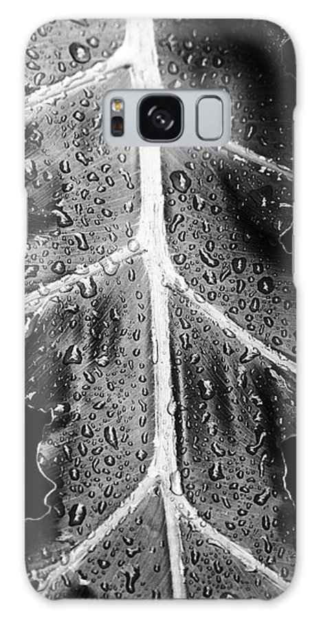 Philodendron Galaxy S8 Case featuring the photograph After The Rain - Bw by Scott Pellegrin