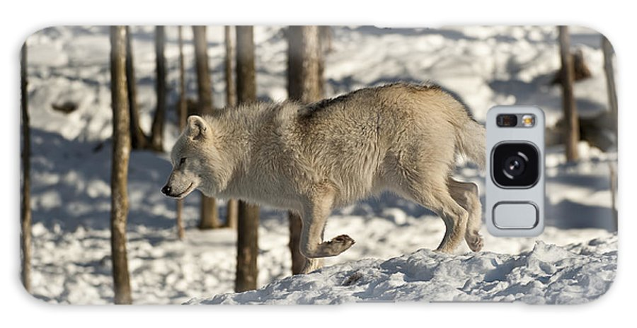 Arctic Wolf Photography Galaxy S8 Case featuring the photograph Arctic Wolf by Wolves Only