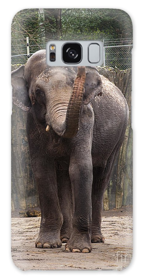 Washington Metro Park Zoo Galaxy S8 Case featuring the photograph Asian Elephant by Mandy Judson