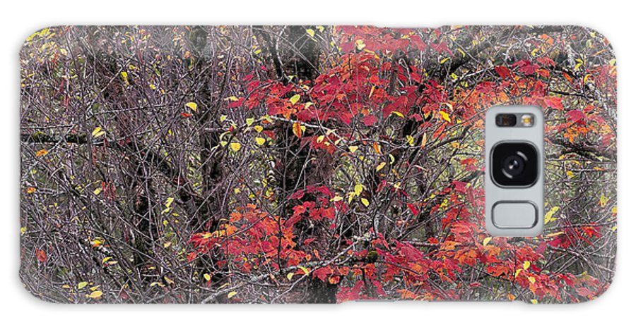Fall Galaxy S8 Case featuring the photograph Autumn's Palette by Alan L Graham
