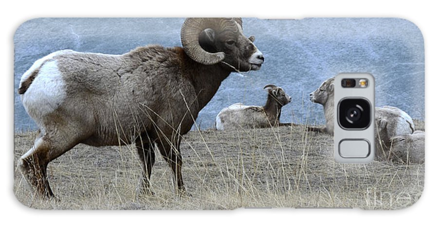 Big Horn Sheep Galaxy S8 Case featuring the photograph Big Horn Sheep 2 by Bob Christopher