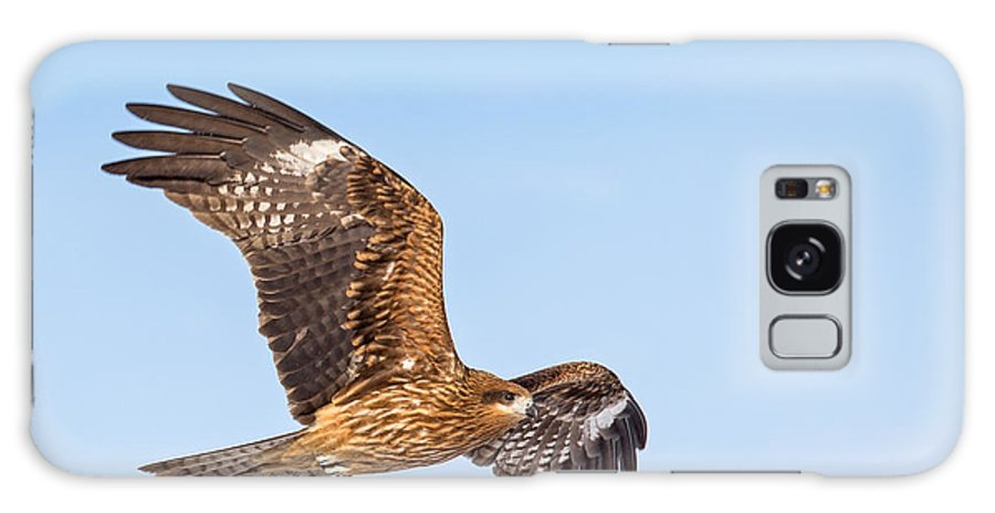 Black Kite Galaxy S8 Case featuring the photograph Black Kite In Flight by Natural Focal Point Photography