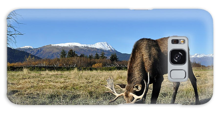 Alaska Galaxy S8 Case featuring the photograph Bull Moose by Clint Pickarsky