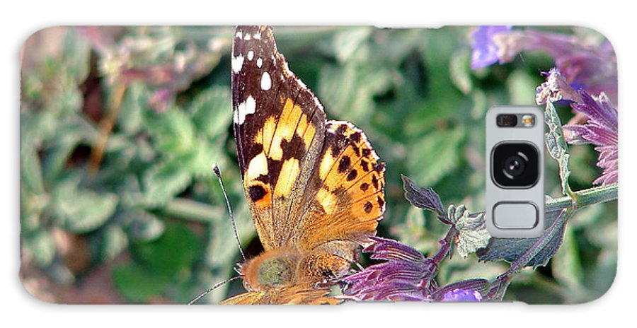 Butterfly Galaxy S8 Case featuring the photograph Butterfly by Cassie Peters