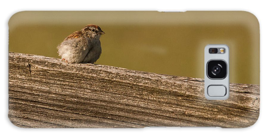 Bird Galaxy S8 Case featuring the photograph Chipping Sparrow by Scott Bush