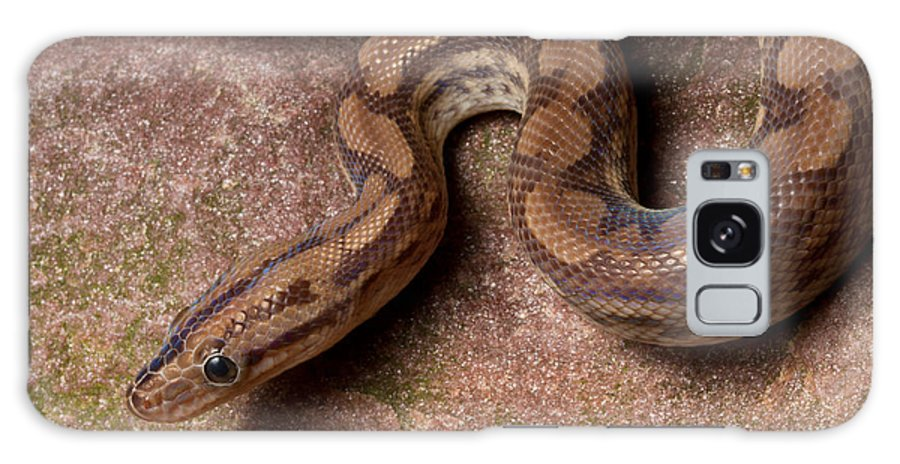 Animal Galaxy S8 Case featuring the photograph Colombian Rainbow Boa Epicrates Maurus 1 by David Kenny