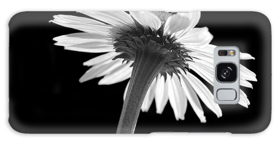 Echinacea Galaxy S8 Case featuring the photograph Coneflower by Tony Cordoza