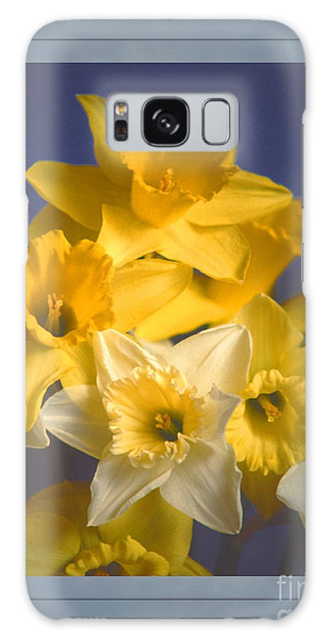 Daffodil Galaxy S8 Case featuring the photograph Daffodils by David Birchall